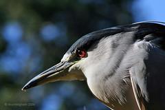 Birds Eye View (D Cunningham) Tags: potofgold dcunningham