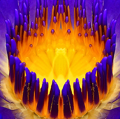 Perpel Felawer Kelosap (DELLipo™) Tags: flowers favorite flower macro beauty photoshop purple explore dell bunga dslr capture finest naturalcolors d80 munge hdellr felawer dellipo perpelfelawerkelosap