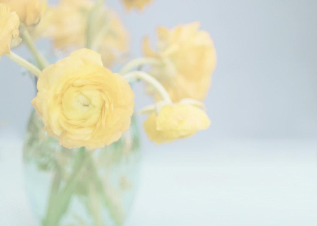 Yellow Ranunculas