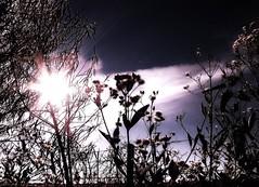 Impulse (Claudio.Ar) Tags: light sky santafe luz argentina field grass silhouette backlight clouds contraluz landscape topf50 topf75 artistic sony country paisaje nubes chapeau campo sensational cielos silueta dsc pampa impulse h9 cubism greatphoto cruzadas photographia bej creativeimagery abigfave aplusphoto visiongroup crystalaward flickrdiamond citrit theunforgettablepictures overtheexcellence goldsealofquality betterthangood sirhenryandco landscapesdreams thesuperbmasterpiece multimegashot absolutelystunningscapes treesdiestandingup photoexel olétusfotos claudioar claudiomufarrege lesamisdupetitprince goldenart phvalue artofimages saariysqualitypictures artistictreasurechest graphicmaster heavenlycaptures imagesforthelittelprince musicsbest absolutelyperrrfect oracope oracobb magicunicornverybest allmammarieswelcome