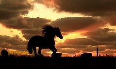 Wild Horses (The Family Dog) Tags: sunset wild horses horse silhouette