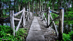 Bridge To Mystery /  (AmpamukA) Tags: bridge wallpaper mystery forest hotel resort thai mysterious    prachinburi   tavalawadee