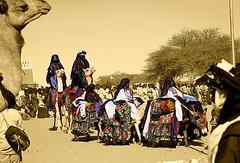 NIG042 (vicentemendez.com) Tags: africa mountains festival niger del desert camel desierto camello montaas tuareg ar iferoune
