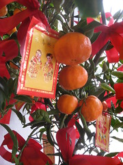 Lucky Red Envelope and Tangerines (shaire productions) Tags: red asian photography photo display chinese decoration culture chinesenewyear blessing photograph luck lucky decor bounty lunarnewyear cultural fruitful