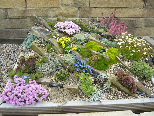 Rockery Plants In A Rock Box Gardeners Tips Unique Alpine Garden Design