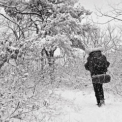 Winter Backpacking, Appalachian Trail, Virginia (Gerald L. Campbell) Tags: camping winter blackandwhite bw snow nature blackwhite tmax bs hiking scenic backpacking appalachia appalachiantrail 500x500 olympusom1n scenicphotography 50mmzuikolens exoticimage 4tografie minoltamultiproscanner