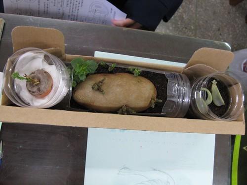 好一個精巧的盒子來收那這些可愛的植物哪