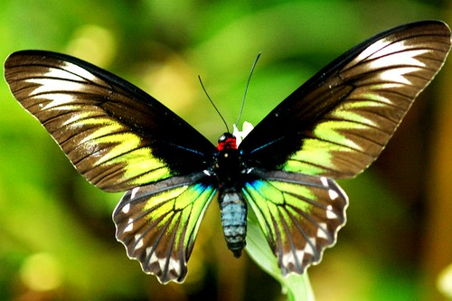 Butterfly Beautiful Pictures, Butterfly Wallpapers