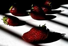 Stay Berry Still And No One Gets Eaten! (raisinsawdust - (aka: tennphoto)) Tags: light red stilllife fruit 50mm still nikon shadows bokeh tennessee strawberries blinds f18 onwhite d80 nikond80