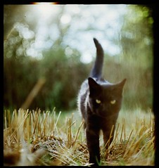Lucio (Running to the embassy) Tags: cat blackcat medium format katze pentacon six kater schwarzekatze mittelformat schwarzerkater
