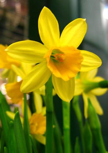 YIP 365.68 Happy Spring!