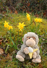 Chump enjoys a stroll in the garden