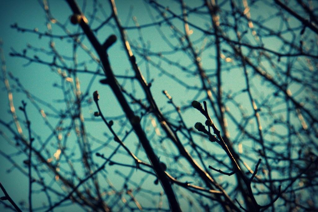 spots of spring