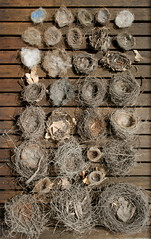 Bird's Nest Collection (gooseflesh) Tags: birds collection nests