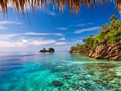 From the Jetty (omniped) Tags: ocean blue sea coral indonesia asia underwater deep scuba diving fans reef papua raja jaya ampat irian olympius e520 misoolecoresort batbitimislandrajaampatindonesia