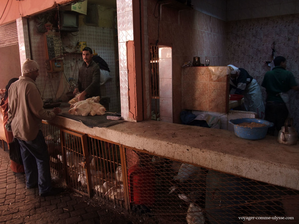 Vente de poulets