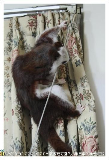 09年二三月小飛鼠Meiz生活照 (26)