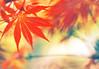 Red Bokeh Wednesday (Lee_Bryan) Tags: red leaves shanghai bokeh hbw