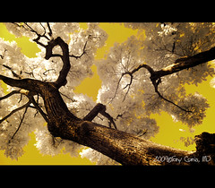 the miracle that is easter (DocTony Photography) Tags: tree ir nikon philippines infrared trunk d90 doctony tokina1116 gettyimagesphilippinesq1