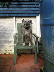 First day of the summer-chair (Libby Hall Dog Photo) Tags: dog dogs cane chairs perro hund hackney pembury libbyhall