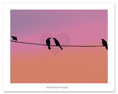 You know you are in love !! (Anuma S. Bhattarai) Tags: pink nepal sunset sky sun bird love nature birds silhouette asia romance lovers april romantic kathmandu crow crows nepali sharma anuma anumasharma 72lumixpanasonicdmcls70