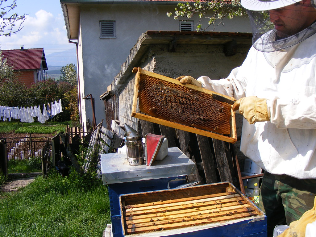 Bees Spring cleaning (28)