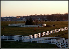 rolling horse farm land with white fences and green grass