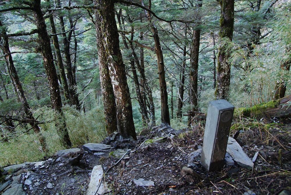 奇萊Day2-07 超陡森林小徑