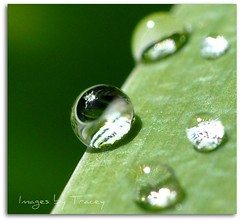Green is the Color of Life (Tracey Tilson Photography) Tags: iris sun sunlight macro reflection green nature water up rain closeup 50mm leaf spring nikon close bokeh may drop fresh diagonal sparkle micro refraction nikkor thursday glimmer 2009 radiant picnik raindrop shimmer raynox d90
