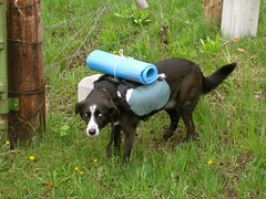 Maya dog with her Granite Gear pack (Lakeview, Montana, United States) Photo