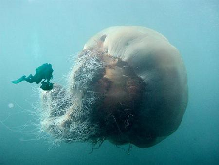 diver_and_jellyfish