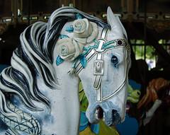 Blue Roses (contrarymary) Tags: goldengatepark roses horse carousel merrygoround blueroses carrosel herschellspillman