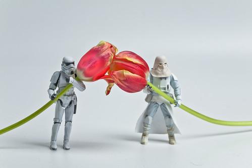 Projekt 52/2010 Woche 17: Flowerpower
