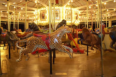 """Cheetah Scovill_Zoo_Carousel 08 • <a style=""""font-size:0.8em;"""" href=""""http://www.flickr.com/photos/49635346@N02/4557265009/"""" target=""""_blank"""">View on Flickr</a>"""