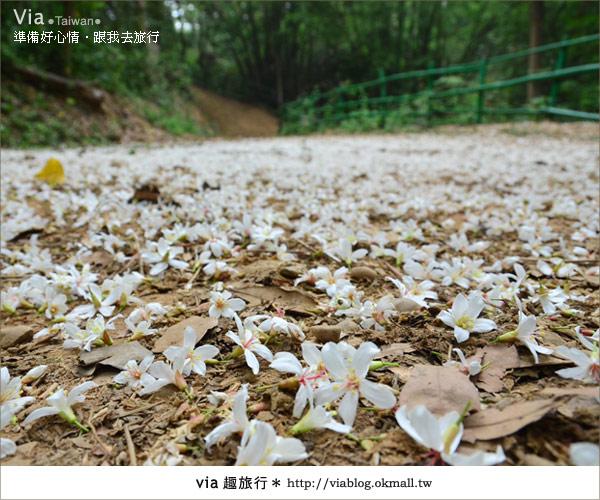 【客家桐花祭】彰化福田賞桐生態園區~跟著via賞桐趣!38