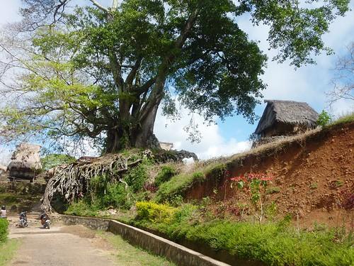 Flores-Moni-Ende- Route (6)