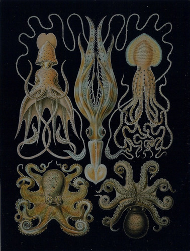 Green Octopus Art