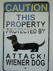 Caution (ChinaLeft) Tags: dog sign puppy dachshund doxie top20signs