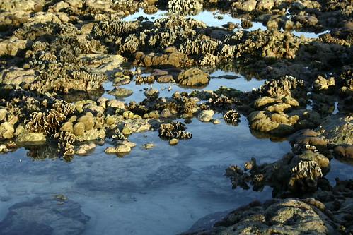 Sumilon coral garden