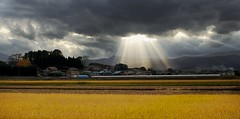 Heaven Rains Down (jasohill) Tags: city autumn sun fall nature colors field weather yellow japan clouds 1025fav landscape 350d japanese heaven rice cloudy deleteme10 background down best beam rainy iwate canon350d backgrounds    shining  rains matsuo bestofthebest touhoku hachimantai aplusphoto flickraward platinumheartaward goldstaraward fotocompetitionbronze fotocompetitionsilver fotocompetitiongold musictomyeyeslevel1 flickrstruereflection1