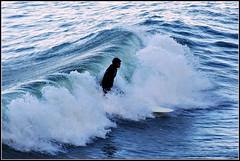 (happicamper.geo) Tags: sanfrancisco surfer surfing surfers fortpoint norcal pentaxk10d da50135