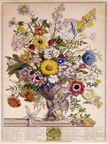 011- Noviembre-Los doce meses del año en flores