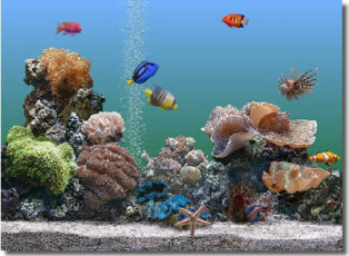 marine aquarium screensaver