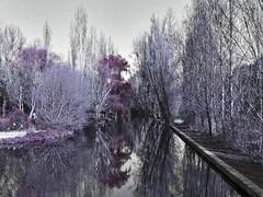 Alameda del Parral (Segovia) (EGMA) Tags: rio river arbol agua paisaje olympus segovia reflejo alameda arroyo e510 photoshopcreativo