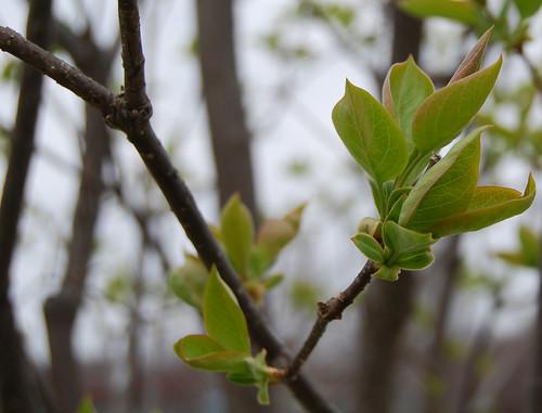 Spring Awakening 18