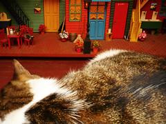 Esperando a los ratones (ARACELOTA) Tags: red orange verde green yellow cat mouse miniature colorado doll sleep colores vermelho mice amarillo amarelo gato felino ratones dormir naranja barrio casita miniatura dollhouse littlehouse pereza rojos casitademuecas