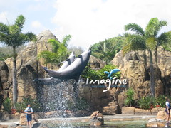 Imagine Dolphin show