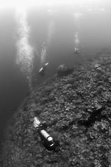 AMBO200903030272 (Matthew Oldfield) Tags: bw indonesia divers underwater wideangle scenes maluku reefscenes ambon kilang