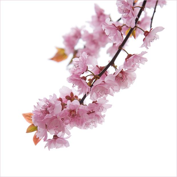 spring diagonal