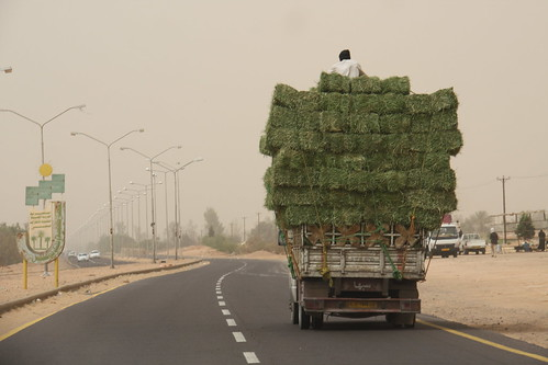 Riding high on hay. Health and Safety in Libya